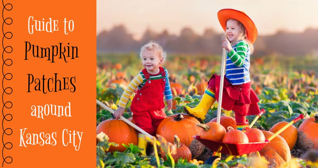 Pumpkin patches in kansas city: find the best pumpkin patch for.