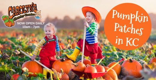 Best Pumpkin Patches in Kansas City Carolyns Country Cousins