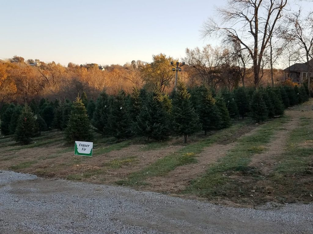 Biermans Christmas Tree Farm in Kansas City