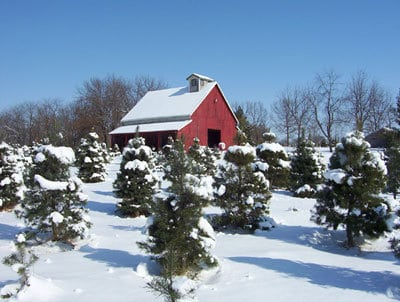 Christmas Ranch Tree Farm in Excelsior Springs, MO