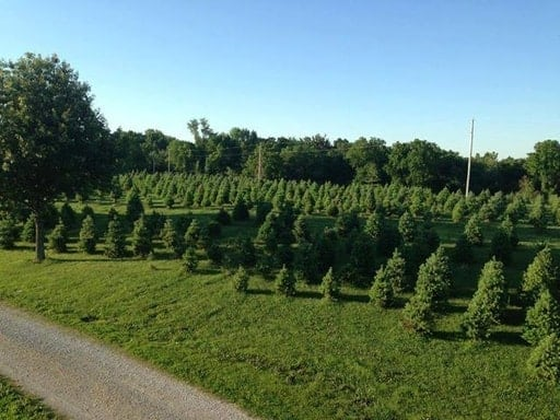 Fort Osage Christmas Tree Farm