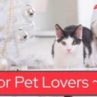 Best Gifts for Pet Lovers in Your Life