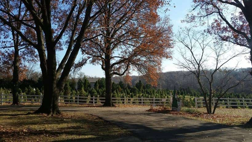 Midland Holiday Pines Christmas Tree Farm